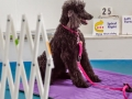 Dog in a sit wait on mat