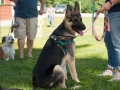 GSD in a sit