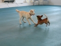Puppies learning appropriate dog play