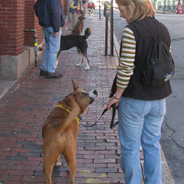 Dog Aggression Towards Humans