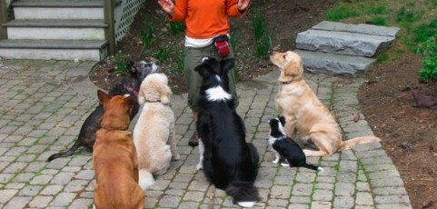 Teaching a Dog to Sit, Stay will Improve His Emotional Control