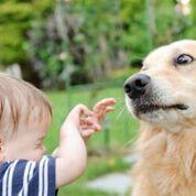 Your Dog Bit Me!
