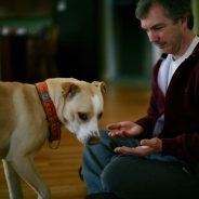 Not all Dogs Want to be Social