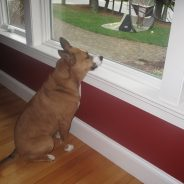 Is your dog predisposed to Separation Anxiety?